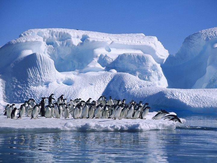 Фото Антарктиды 22