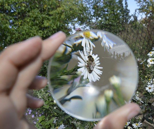 Вика К. – фото насекомых