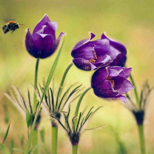 Дарья Казбанова – фото насекомых
