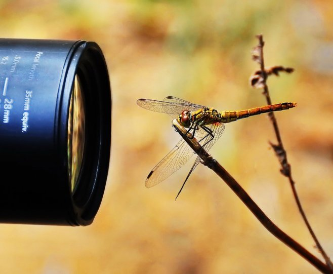 ФотоЛорик . – фото насекомых