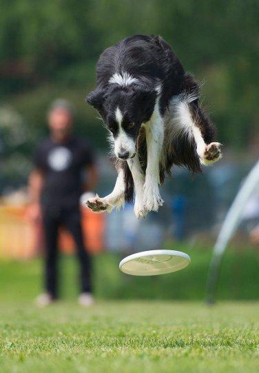 Летающие собаки Клаудио Пикколи - №12