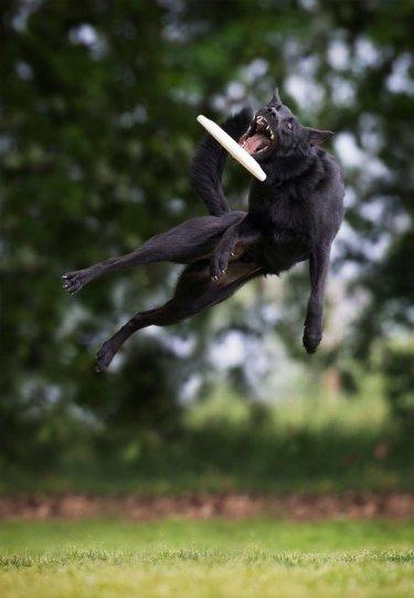 Летающие собаки Клаудио Пикколи - №14