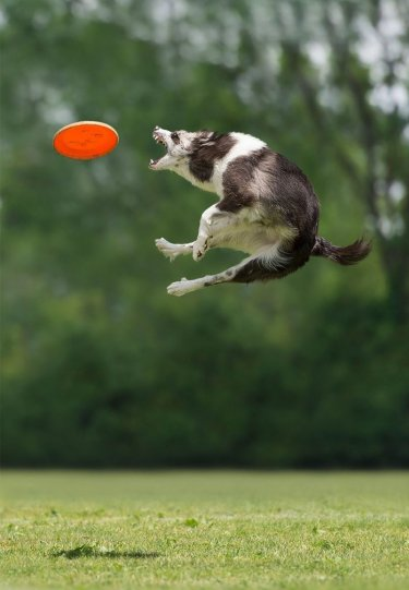 Летающие собаки Клаудио Пикколи - №18