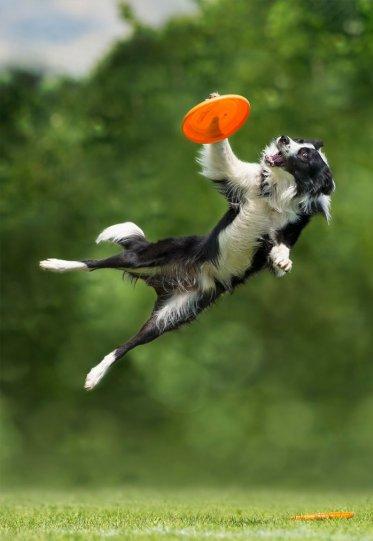 Летающие собаки Клаудио Пикколи - №20