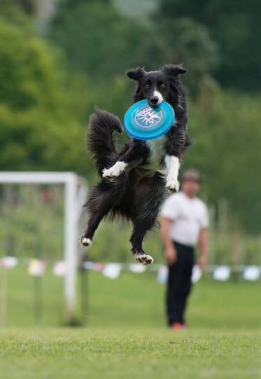 Летающие собаки Клаудио Пикколи - №9