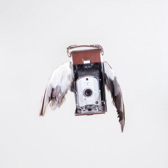 Летающие птицы-фотокамеры Пола Октавиуса - №2