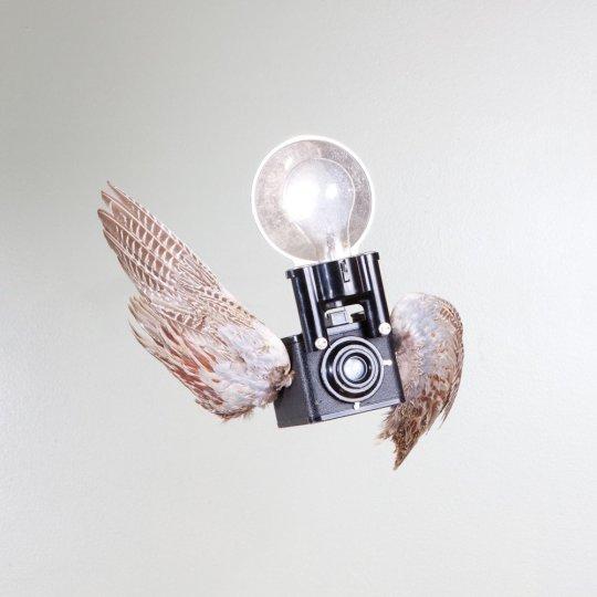 Летающие птицы-фотокамеры Пола Октавиуса - №6