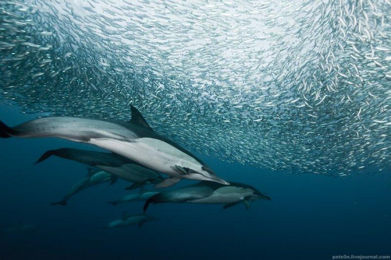 Потрясающие подводные фотографии Александра Сафонова - №9
