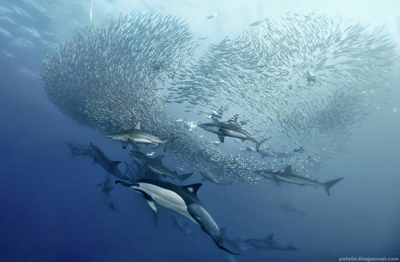 Потрясающие подводные фотографии Александра Сафонова - №13
