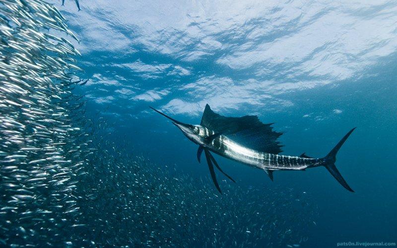 Потрясающие подводные фотографии Александра Сафонова - №17