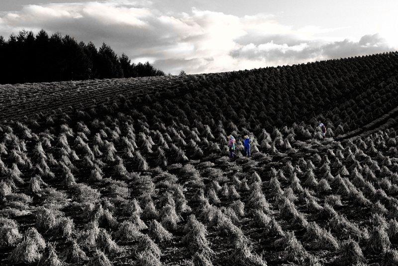 Ландшафтная сказка в фотографиях Кента Шираиши - №21
