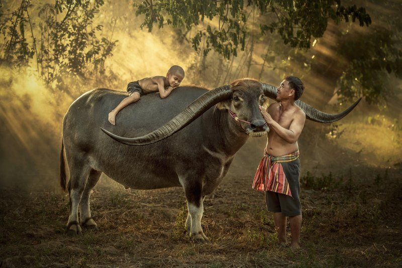 """""""Азия"""" в фотографиях Jakkree Thampitakku - №3"""