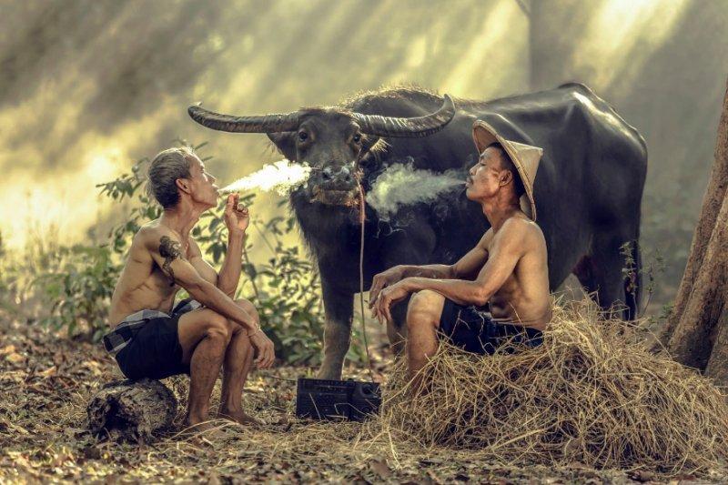 """""""Азия"""" в фотографиях Jakkree Thampitakku - №15"""