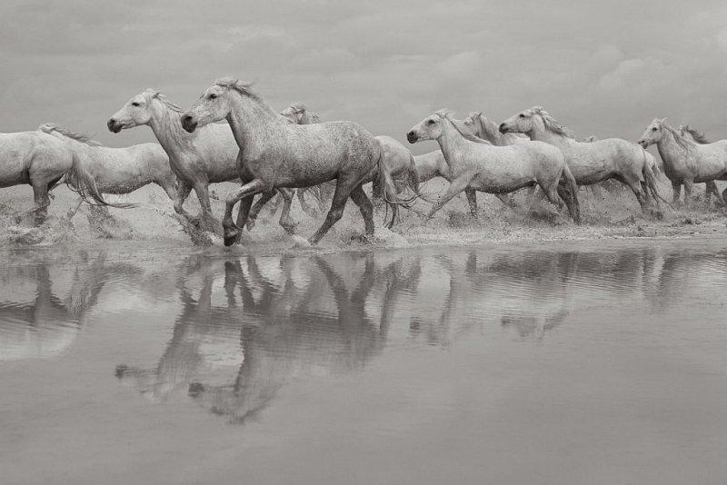 Фотограф Дрю Доггетт - №15