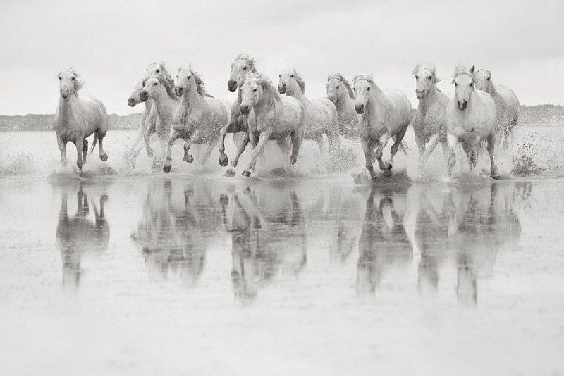 Фотограф Дрю Доггетт - №19
