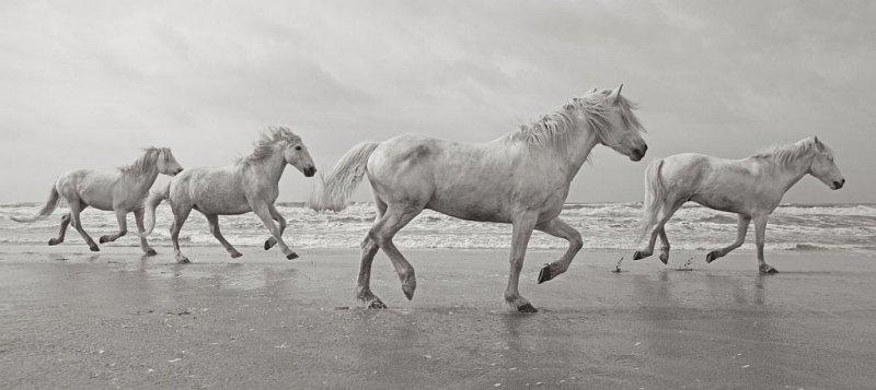 Фотограф Дрю Доггетт - №1