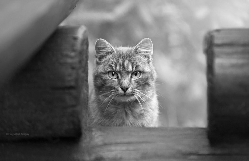 Портреты животных от фотографа Сергея Полюшко - №6
