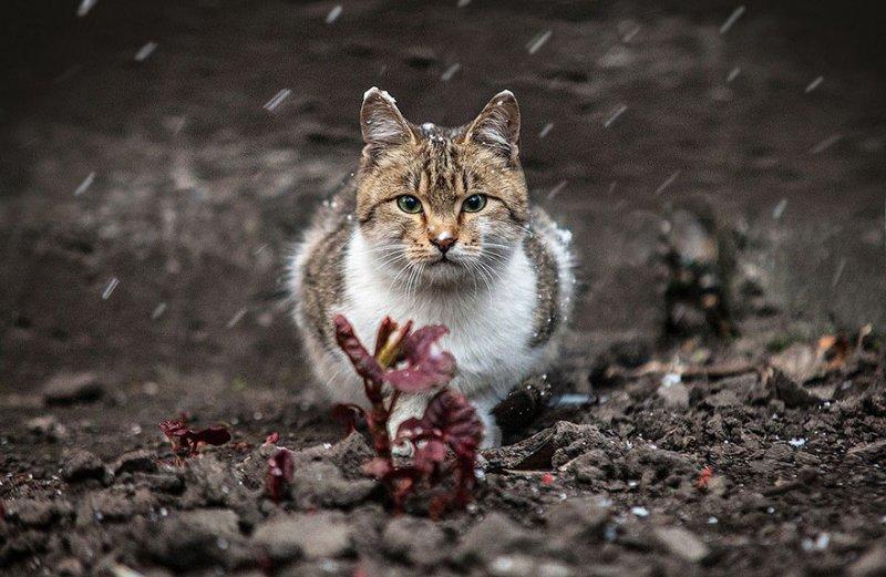 Портреты животных от фотографа Сергея Полюшко - №5