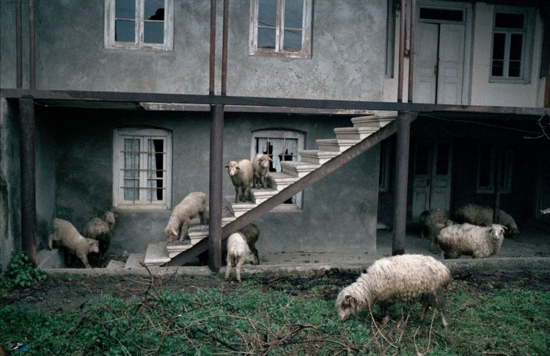 Фотограф Дмитрий Гомберг - №8