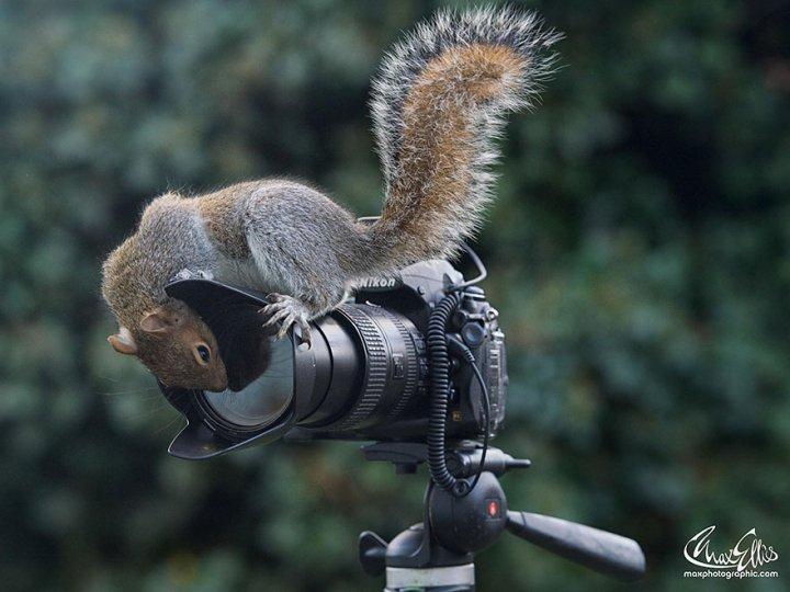 Фотограф Макс Эллис - №8