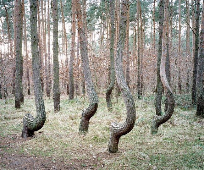 Фотограф Даниэль Коваловский - №10
