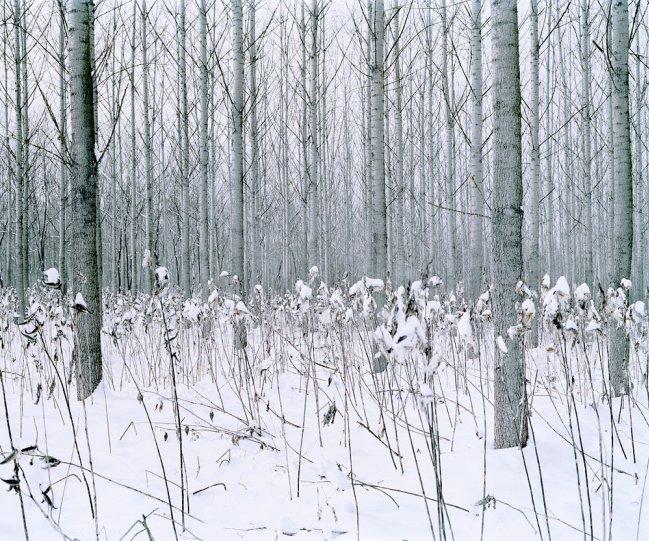 Фотограф Даниэль Коваловский - №14