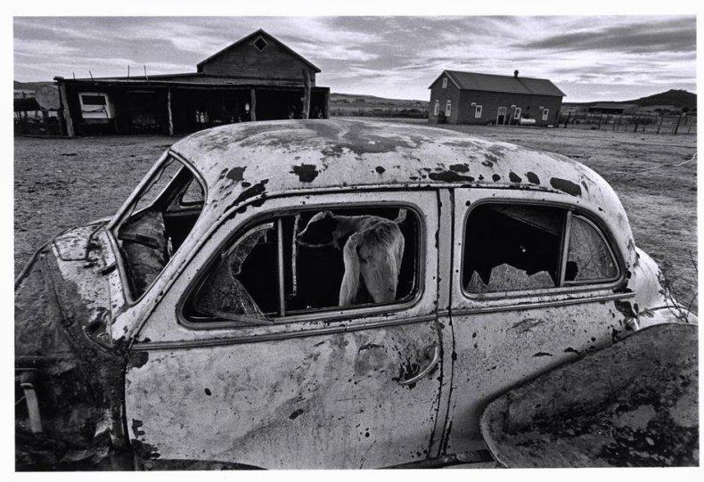 Фотограф Ларри Тоуэлл - №3
