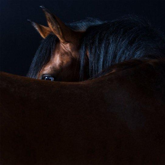 Фотограф Роберт Бахоу - №8
