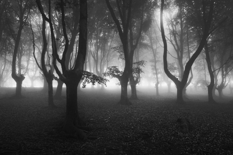 Автор фото: Агустин Бассело. «Шепот»
