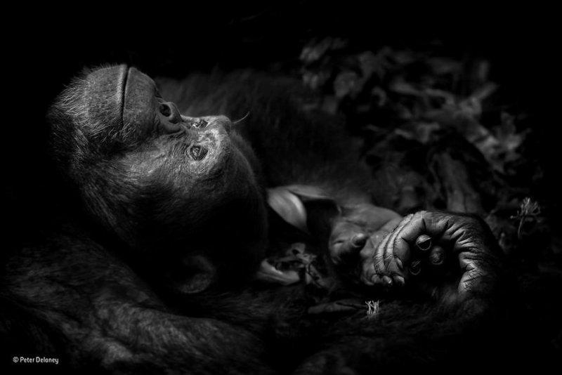 Автор фото: Питер Делейни. «Созерцание»