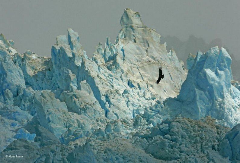 Автор фото: Клаус Тамм. «Царство кондора»