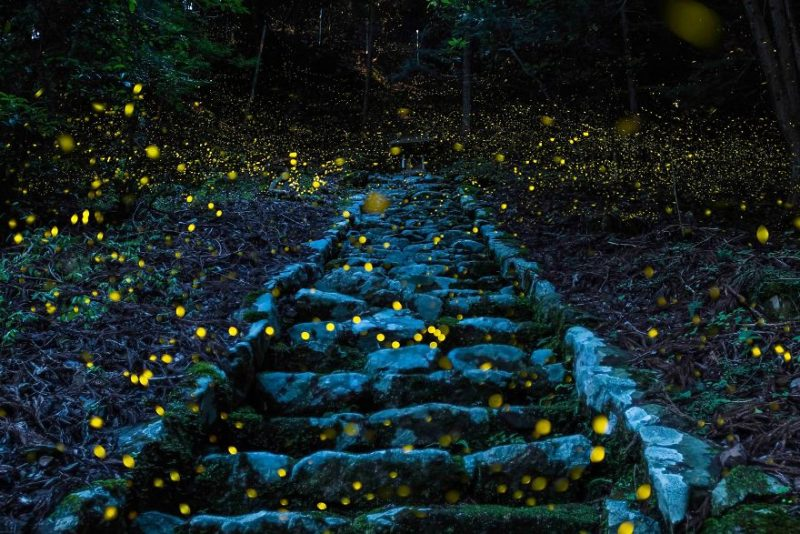 """Поощрительная премия в категории """"Природа"""": """"Лес фей"""", провинция Тамба, Япония, автор – Ютака Такафудзи"""