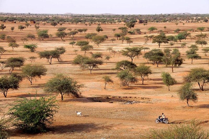 Буш. Гором Гором, Буркина-Фасо
