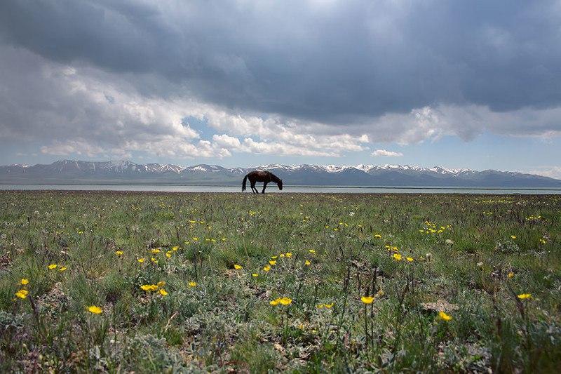 Мир и гармония на озере Сонкель, Кыргызстан