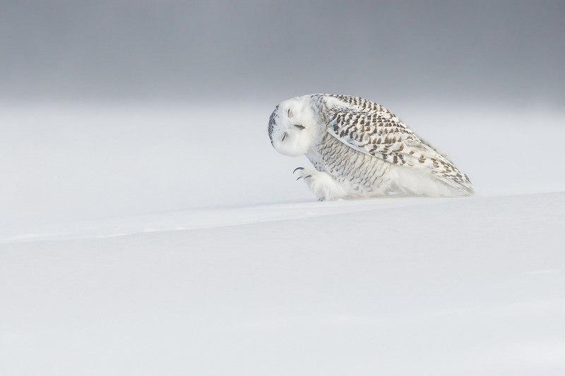 20 самых шедевральных снимков, сделанных для National Geographic - №4