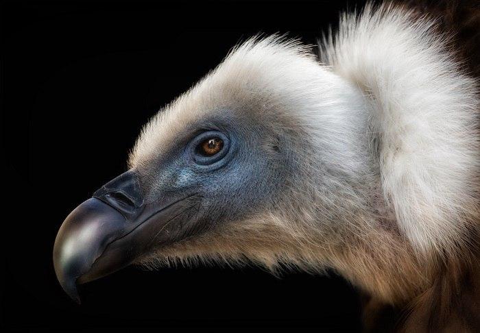 Bird Photographer of the Year - №8