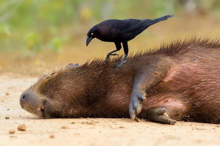 Bird Photographer of the Year - №13