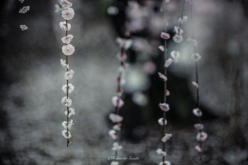 Фотограф Хиденобу Сузуки - №4