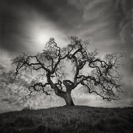 Фотограф Стив Ландерос - №1
