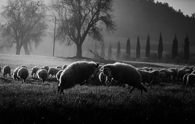 Фотограф Марко Сгарби - №1
