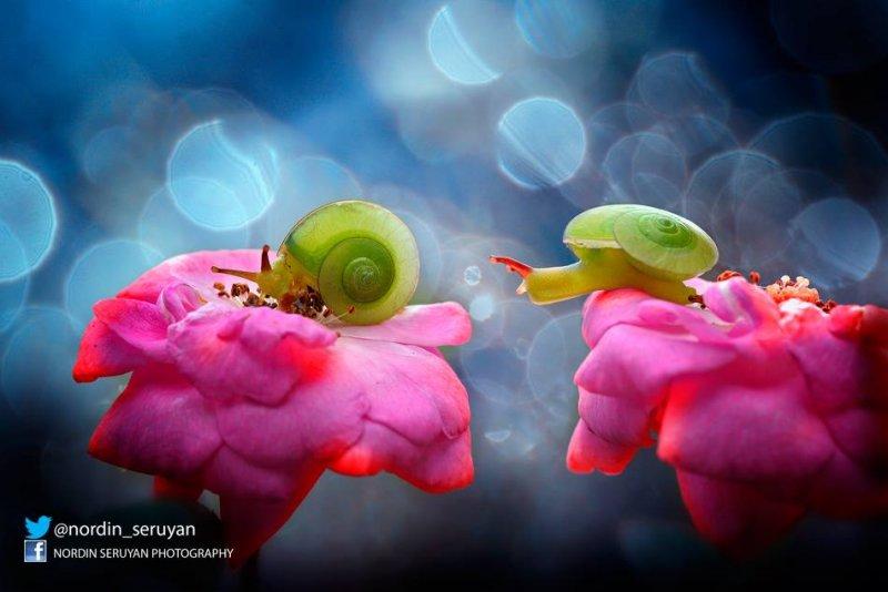 Фотограф Nordin Seruyan - №16
