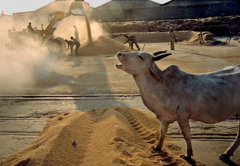 Индия в объективе легендарного Рагху Рая - №32