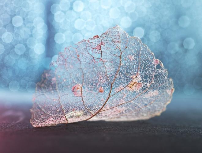 Абстрактное искусство в простых листьях - №3