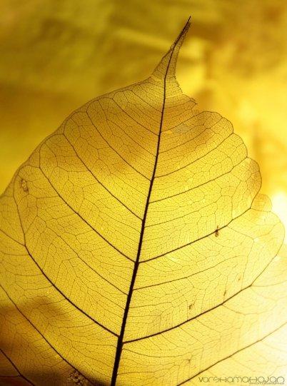 Абстрактное искусство в простых листьях - №20
