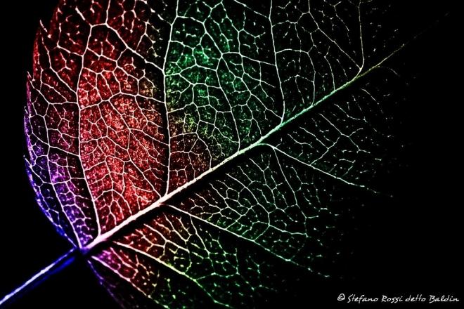 Абстрактное искусство в простых листьях - №7