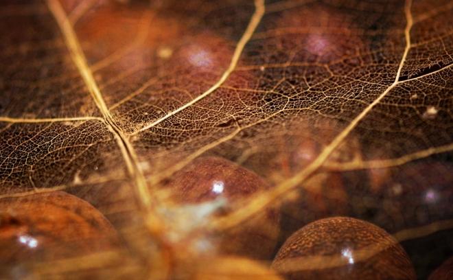 Абстрактное искусство в простых листьях - №13