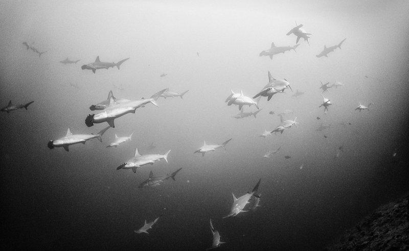 Жизнь под водой от фотографа Ануара Патьяне - №5