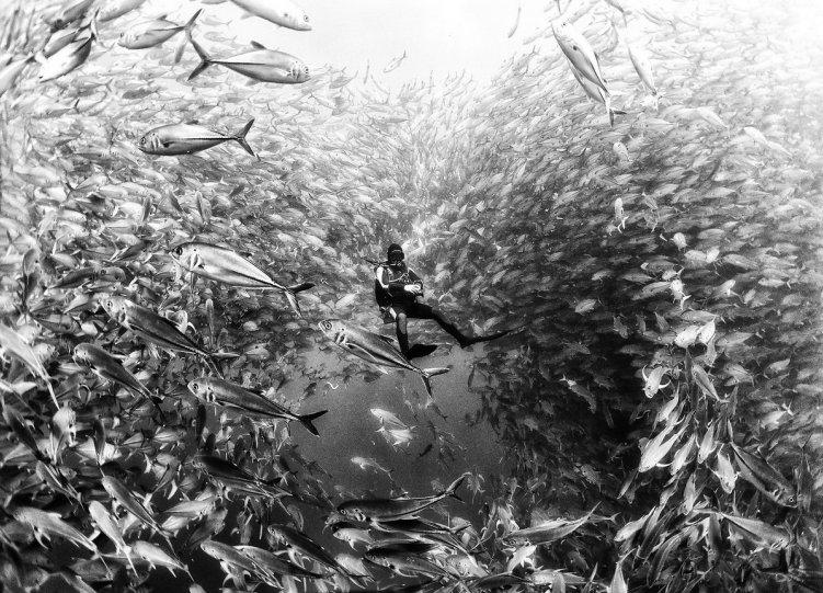 Жизнь под водой от фотографа Ануара Патьяне - №3