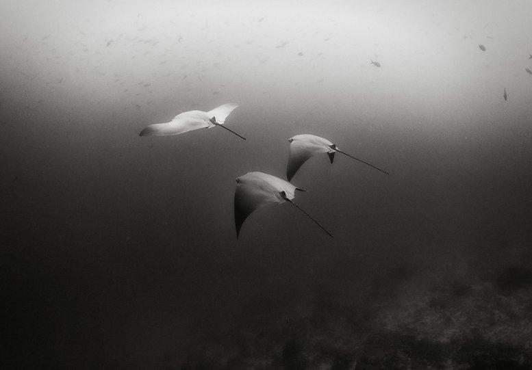 Жизнь под водой от фотографа Ануара Патьяне - №12