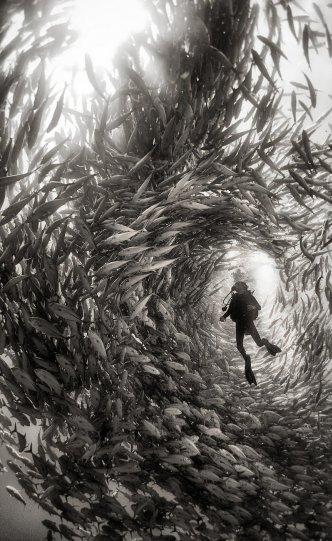 Жизнь под водой от фотографа Ануара Патьяне - №21